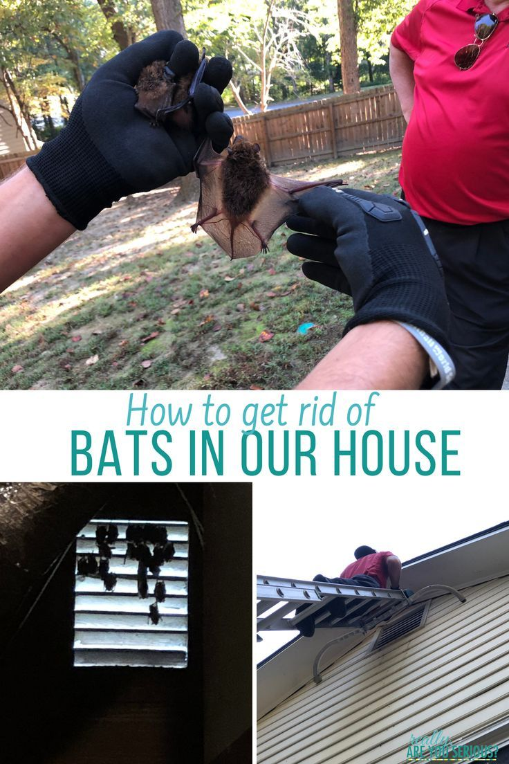 get rid of bats in house Getting rid of bats, Bat house