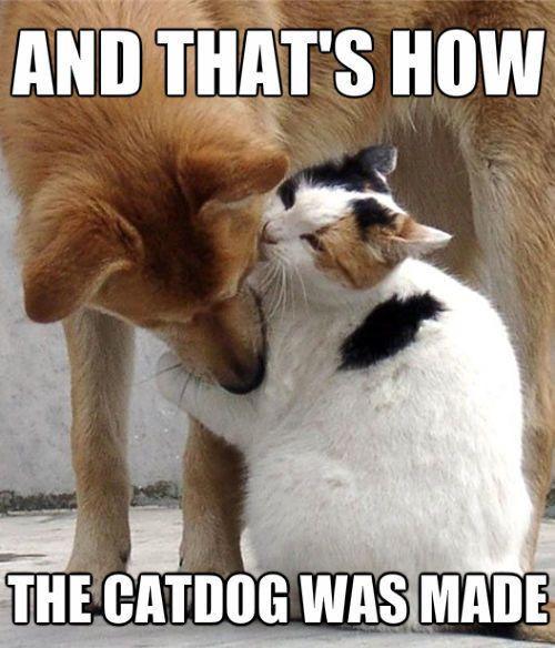 25 Funny Cat Memes That Will Make You Lol Cat Memes Cute