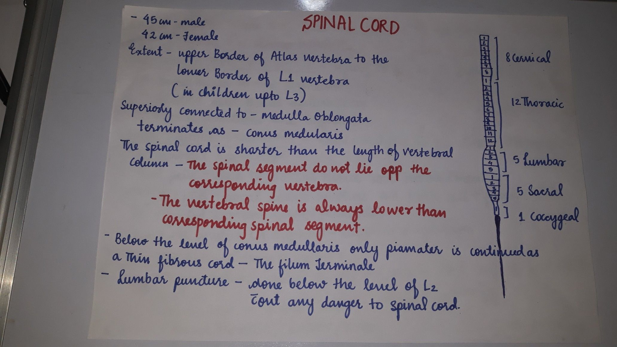 25+ Spinal cord notes Anatomy  mbbs Dr.Scgmc Nanded