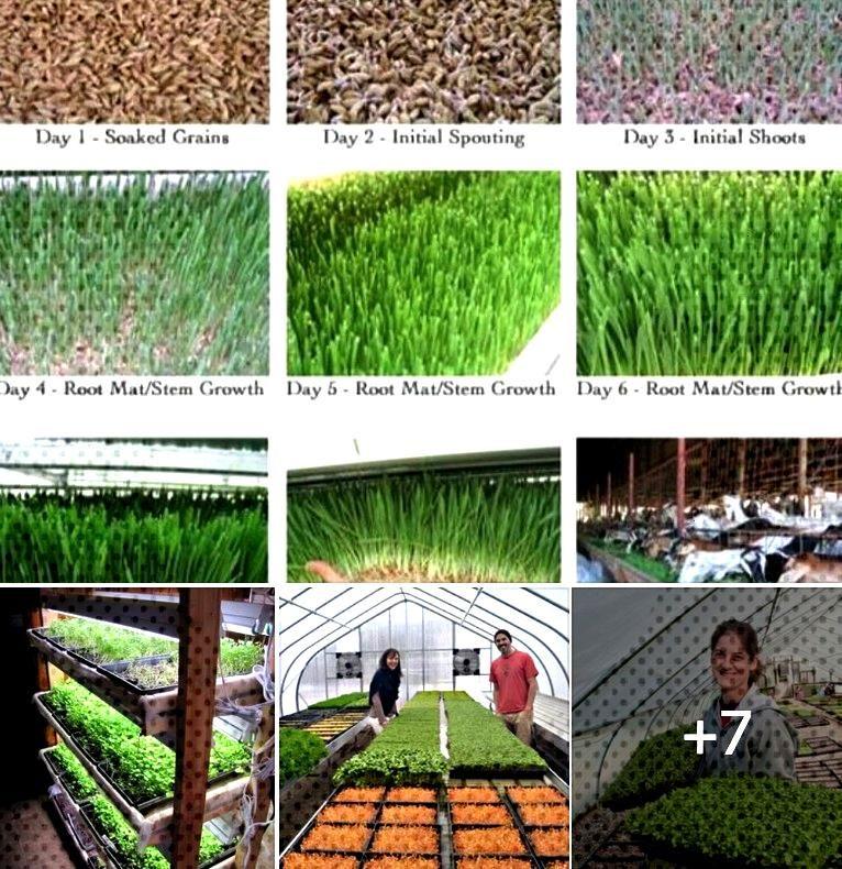 microgreens Garden microgreens Growing Off Grid Living How to Grow a Garden of Indoor Microgreens