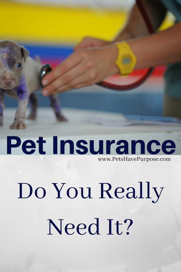 Click Here Pet Health Insurance Emotional Support Animal Pet