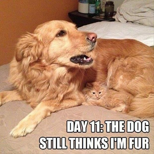 Funny Animals Are Even Funnier With These Captions 30 Pics