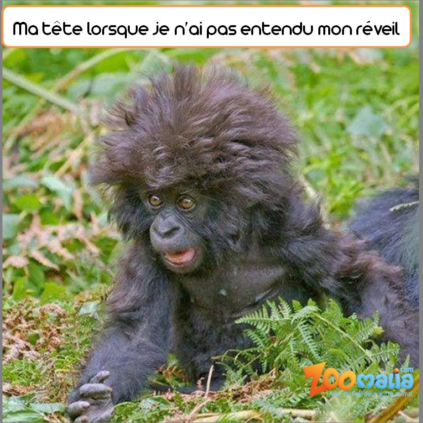 #monkey #humour #alarm #animalerie #zoomalia