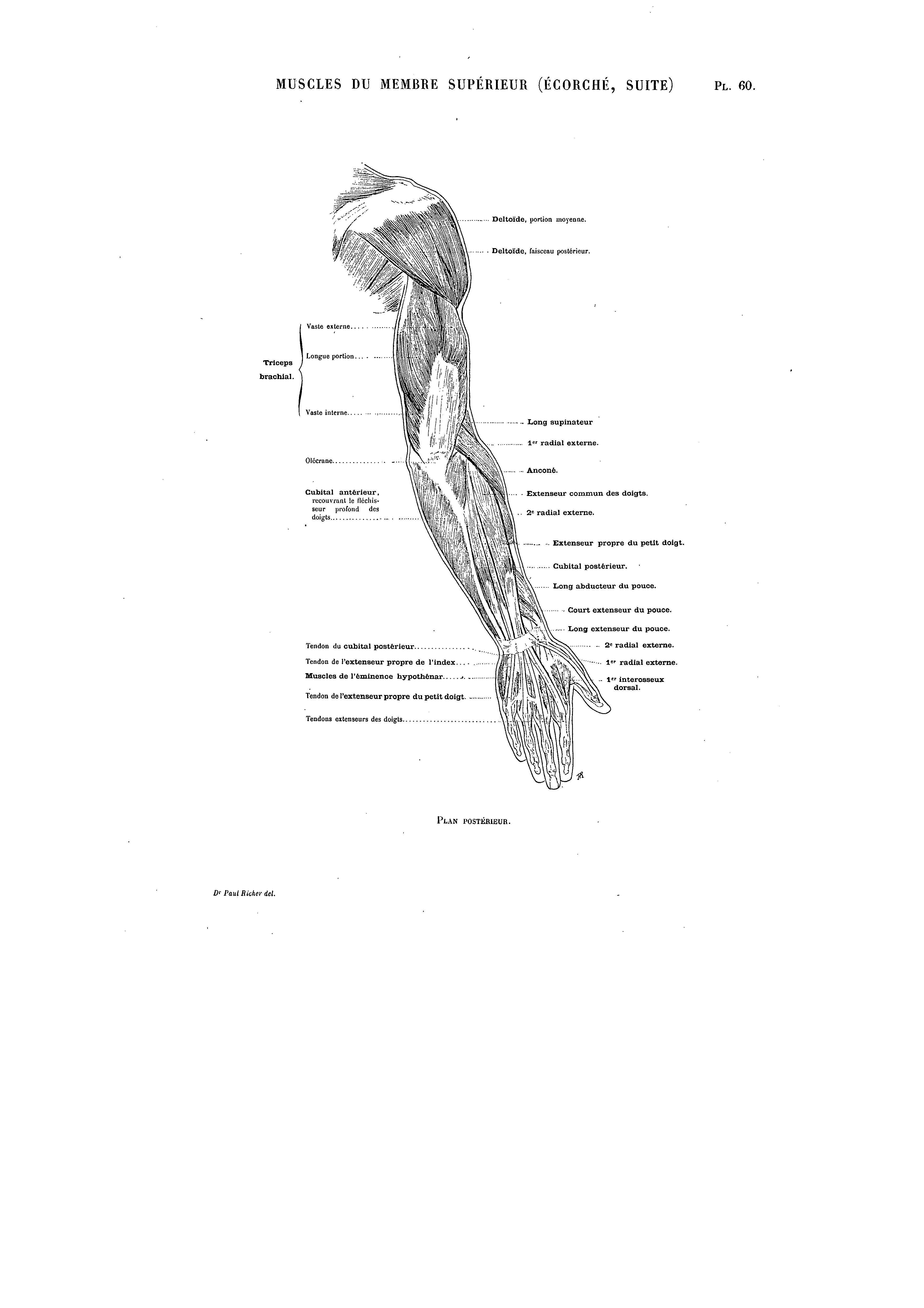 Großzügig Hals Anatomie Ct Scan Galerie - Menschliche Anatomie ...