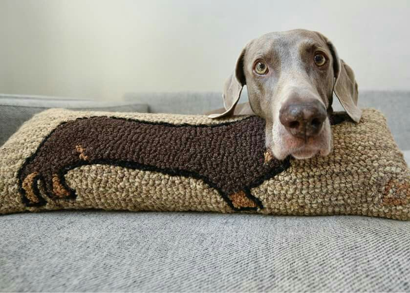Pin On Dachshunds And A Few Of Their Less Interesting Doggy