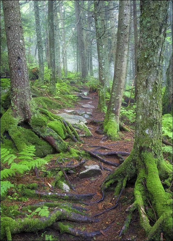 703 best vermont green mountain state images new england travel rh pinterest com