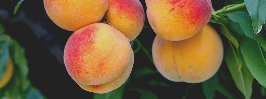 Peaches are one of the best summer fruits around if you ask us and seeing as it's officially Peach Month, it's time to truly show love for our fuzzy skinned friends. There are lots of ways to celebrate Peach Month—with your morning oatmeal, in your water or even on the grill. Of course, peach pie and cobbler are both great too, but they tend to take a while to make.