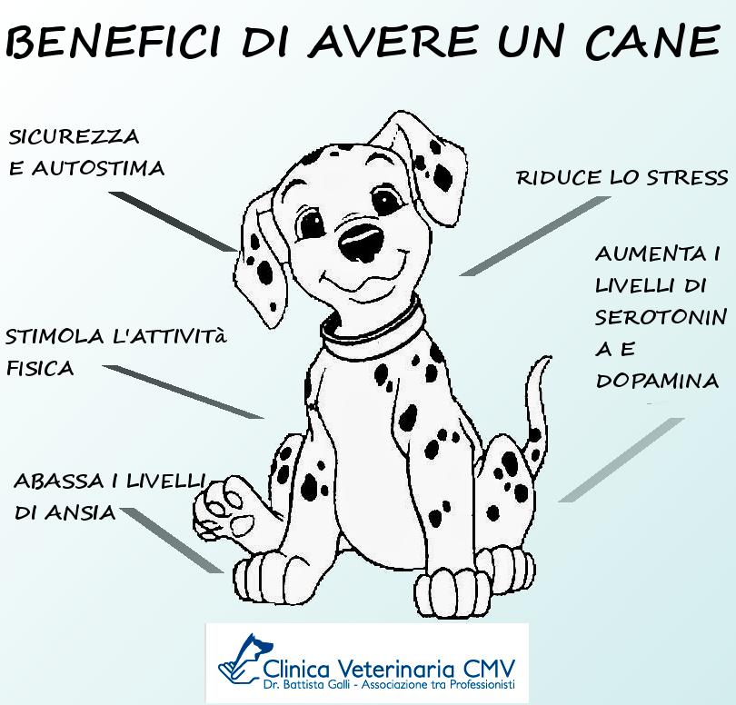 Benefici di avere un cane... | Citazioni sui cani, Cani, Animali domestici