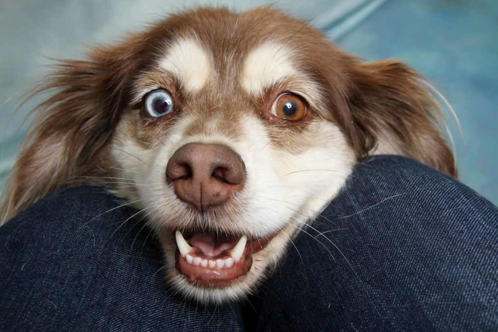 Dog Body Language 10 Astonishing Signs That Your Dog Is Happy In