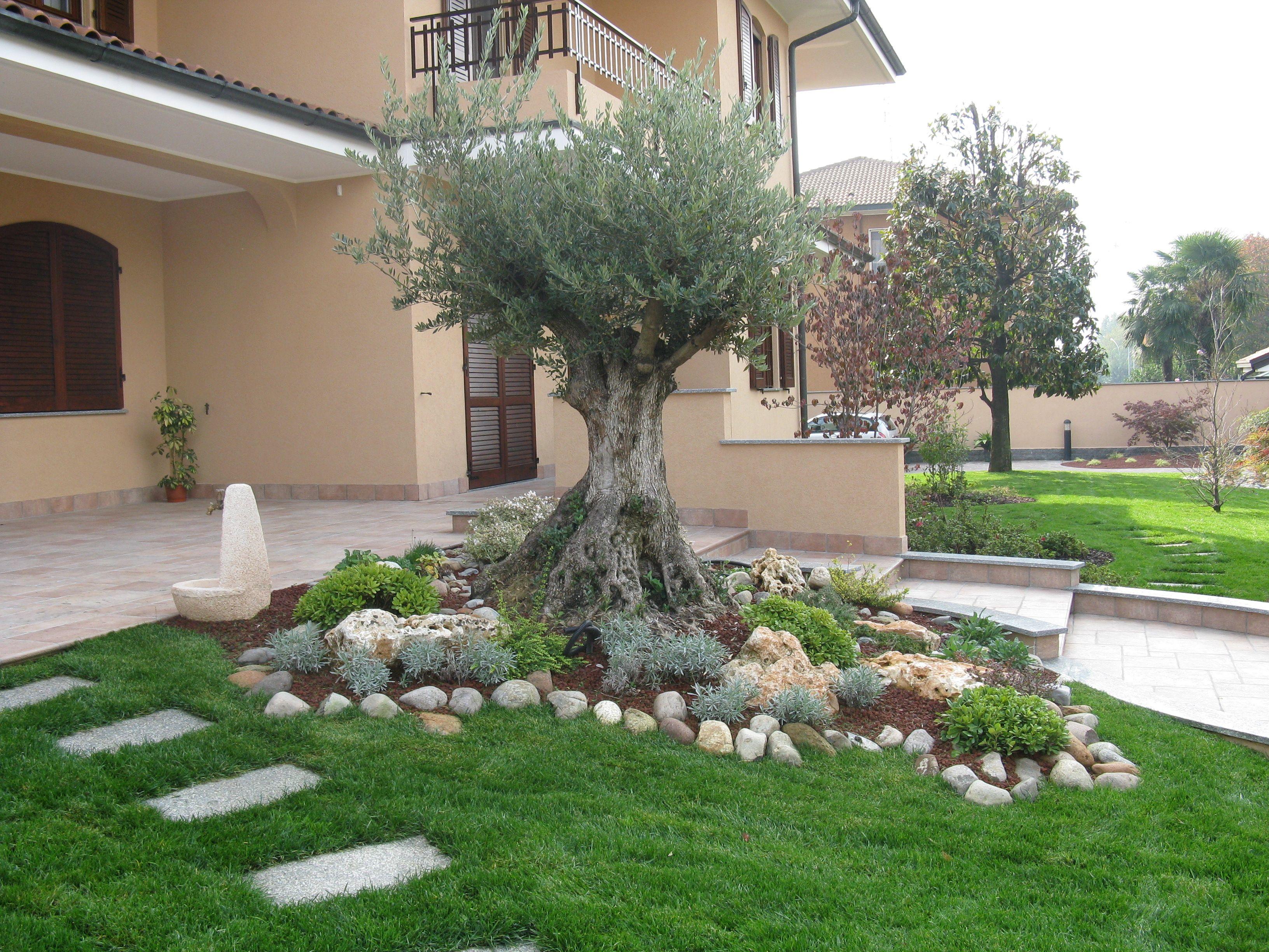 abbellire un albero di ulivo ecco 16 splendidi esempi per