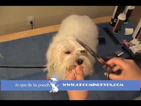 How To Naturally Remove Tear Stains From The Fur On Your Dog S