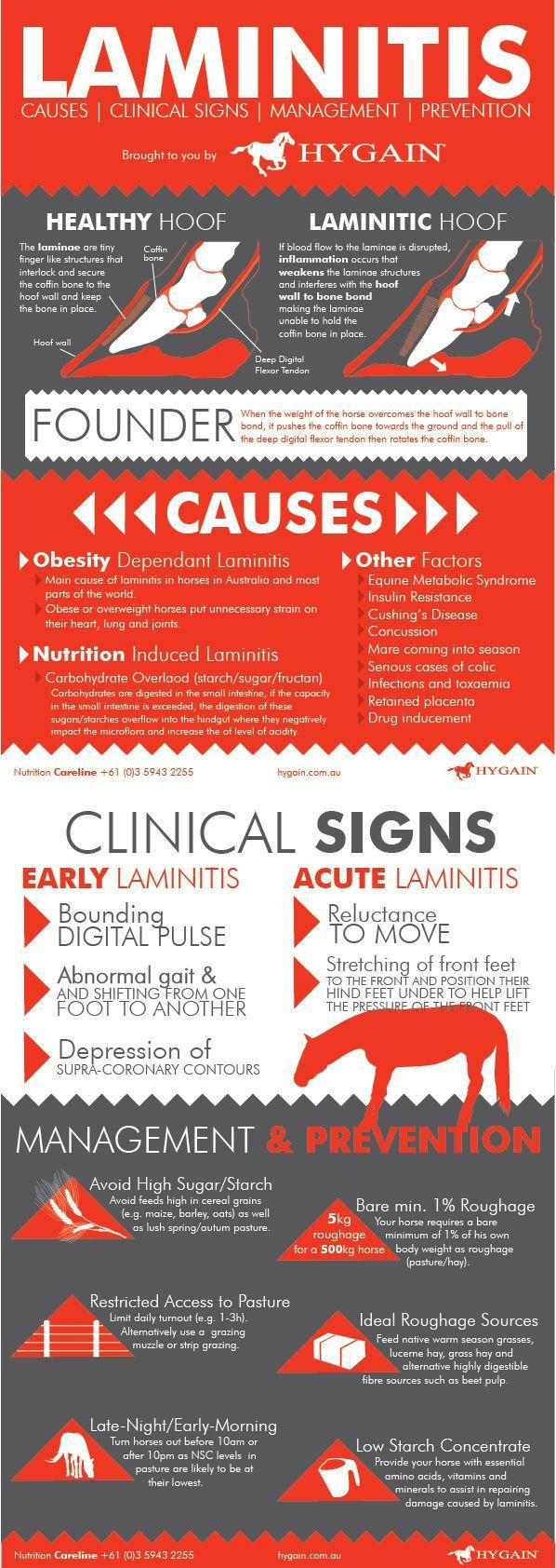 Fact Sheet - Laminitis in Horses | Horse health. Healthy horses. Horse care tips