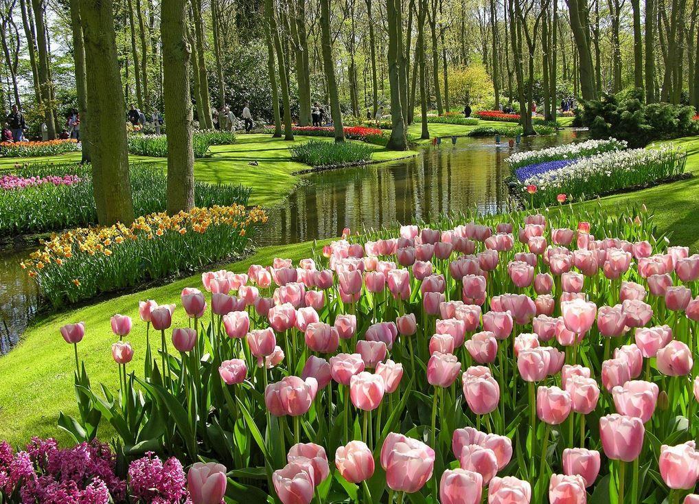 Tulips Britzer Garden Berlin Beautiful Gardens Most Beautiful Flower Pictures Beautiful Flowers Pictures