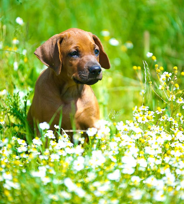 Spring Allergies For Dogs And Cats