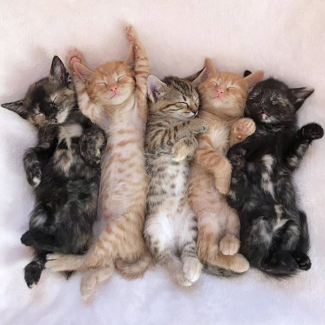 Cat Kitty Cats Cats Make Cat Home Cat Funny Love Cat Quote Cats Cats Cute Cats Pets Kittens In 2020 Cute Cats Kittens Cutest Cute Cats And Kittens