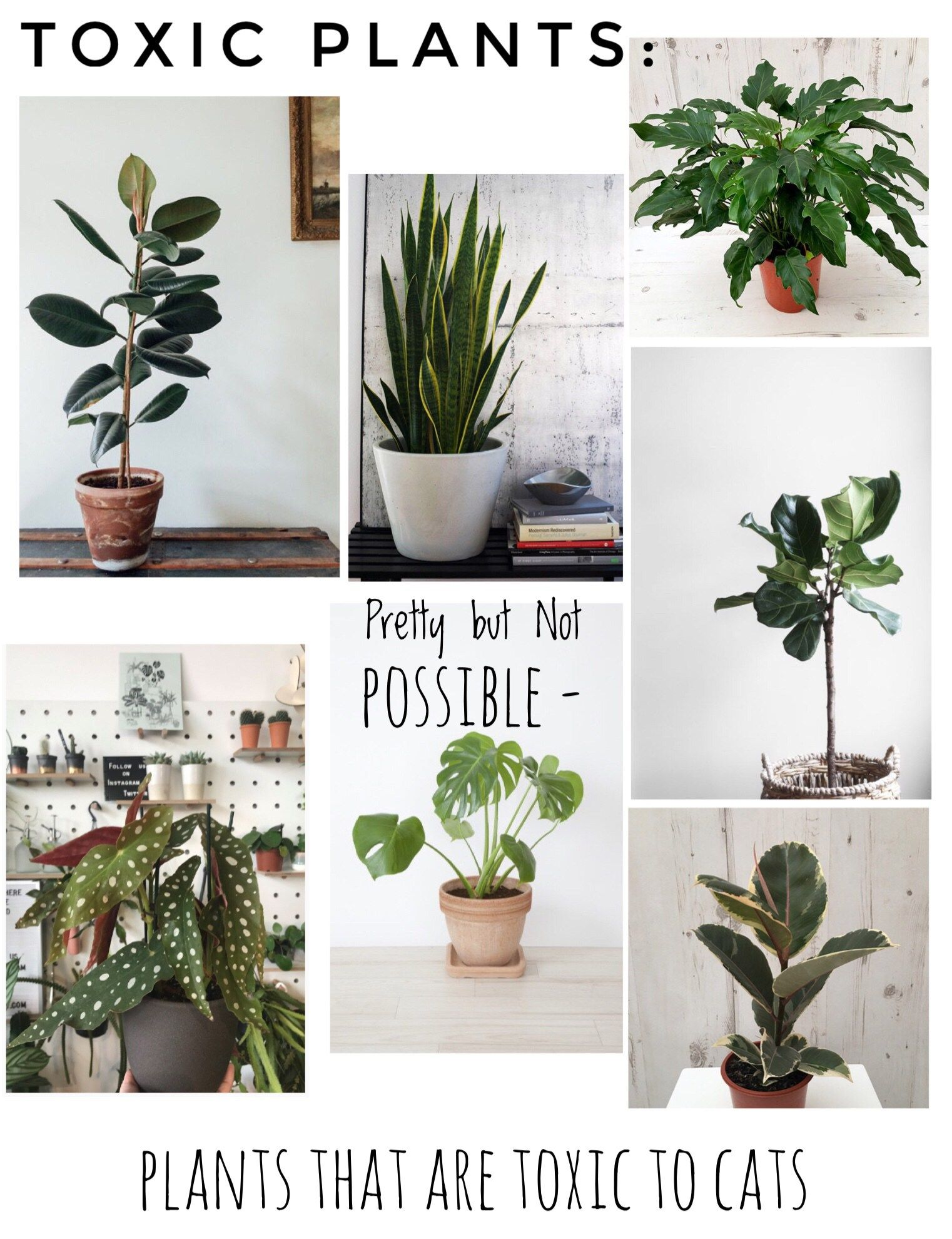 Toxic Plants To Pets Cats Safe House Plants Cat Safe House Plants Houseplants Safe For Cats