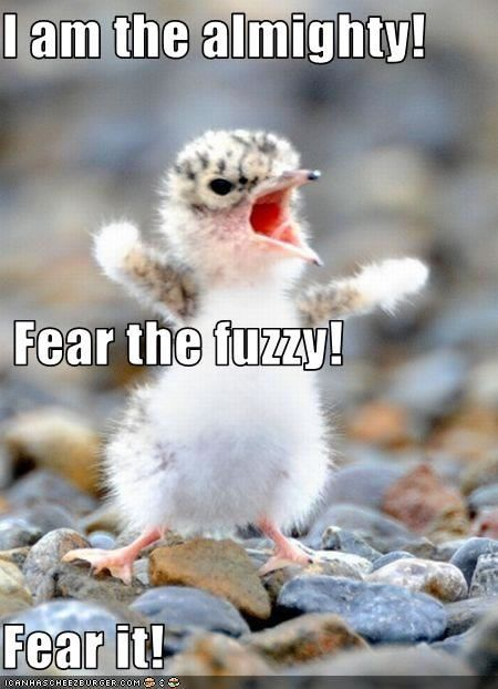 Fuzzy the Almighty!