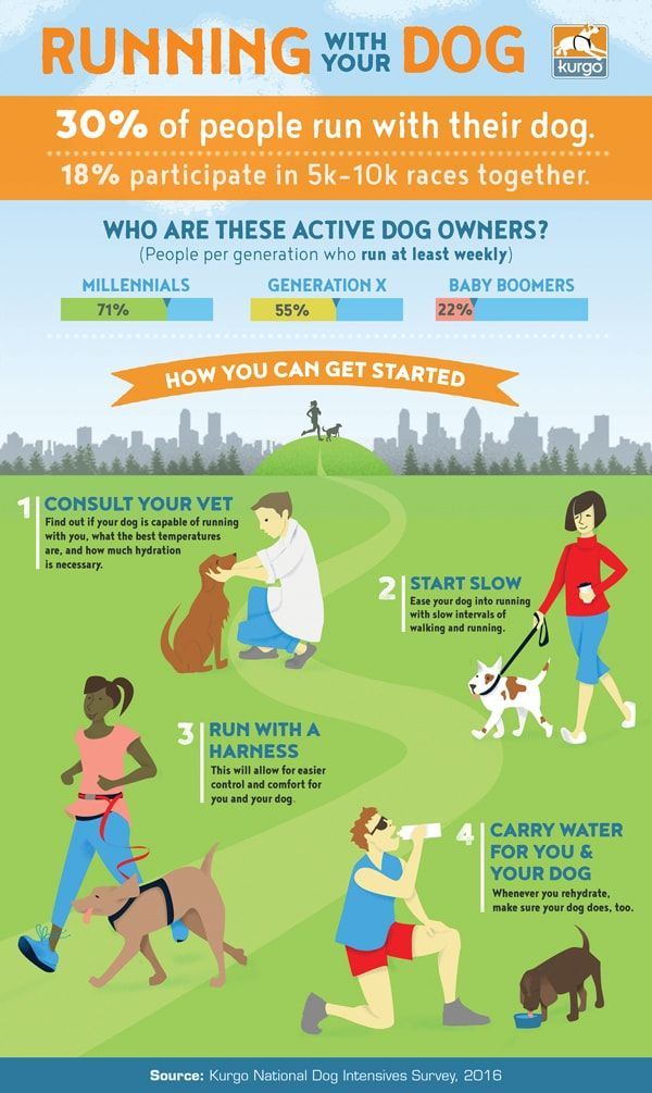 The Complete Guide To Running With Your Dog Puppy Training