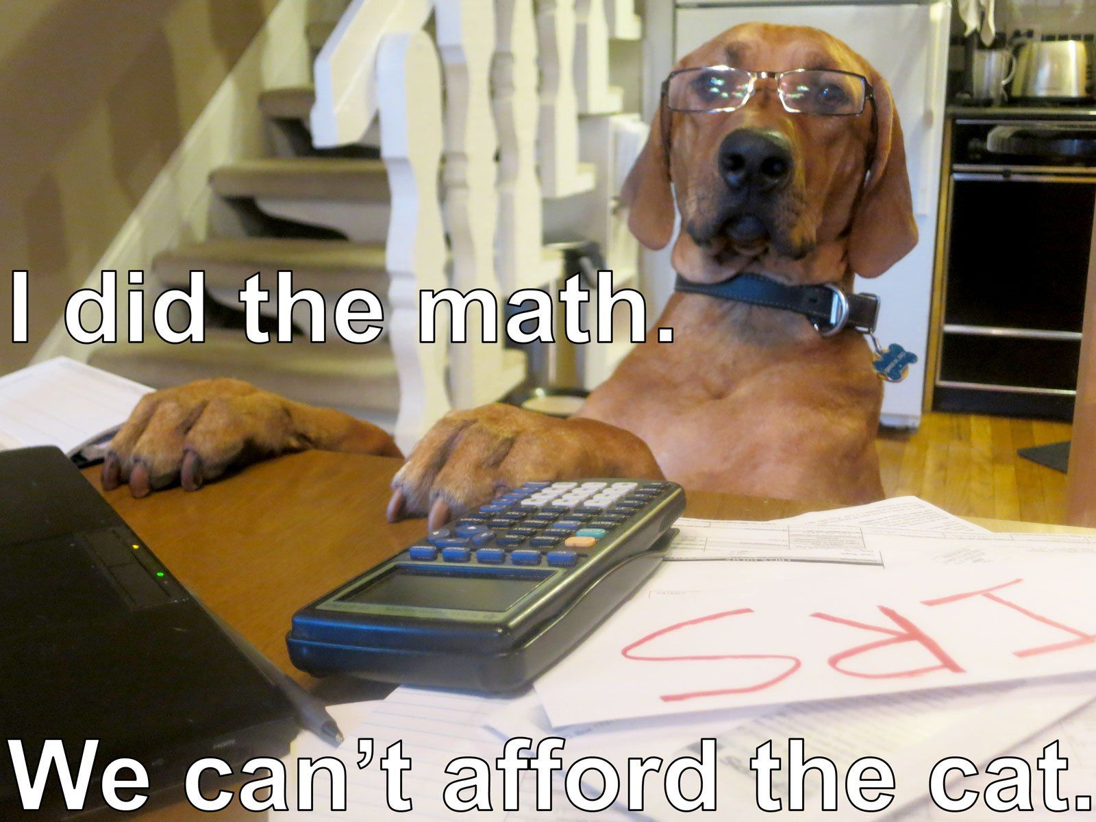 Cute Math Pictures With Dogs