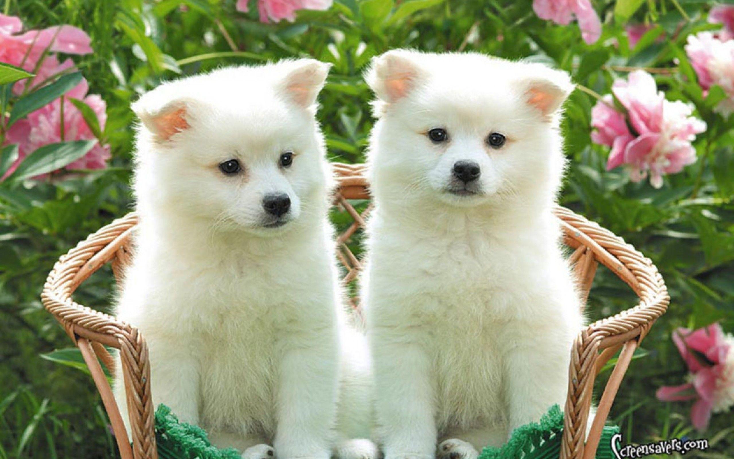 Cute Dog Images Hd Wallpapers Desktop Images Fidelity: Cute Puppy Pictures Wallpapers - Wallpaper Cave