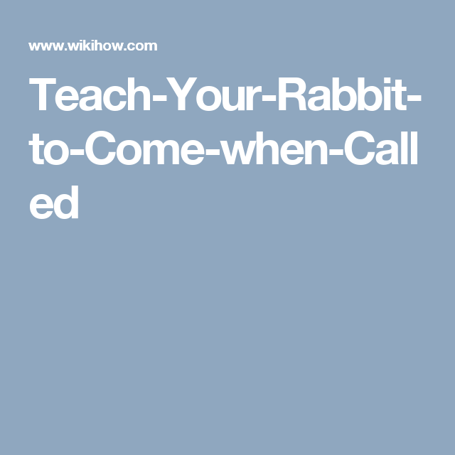 Teach-Your-Rabbit-to-Come-when-Called