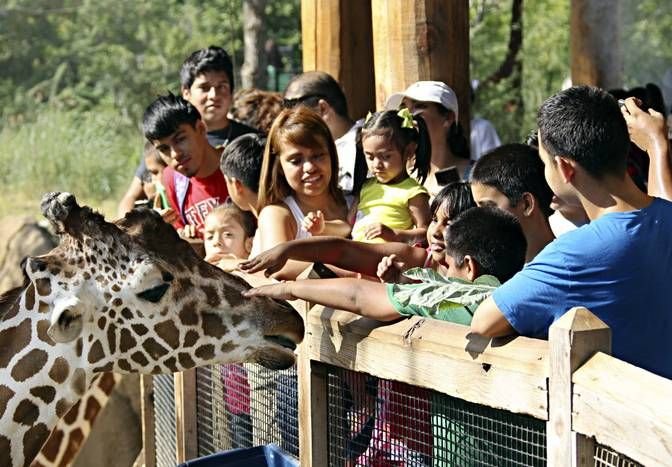 Photos: A packed house at the Dallas Zoo as thousands enjoy Dollar Day