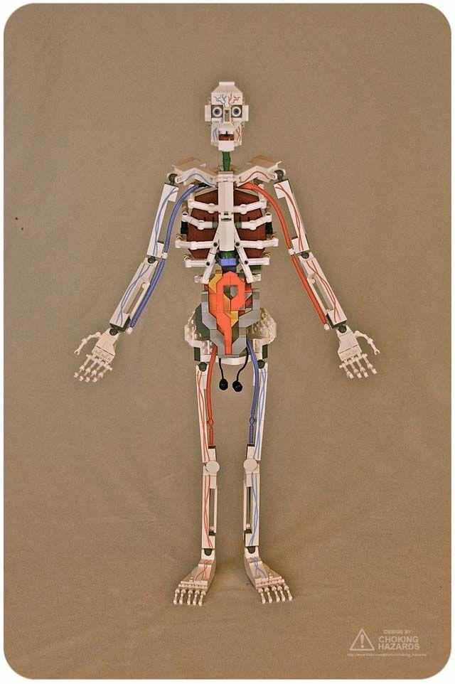 LEGO Anatomy Models | Biología y Maquetas