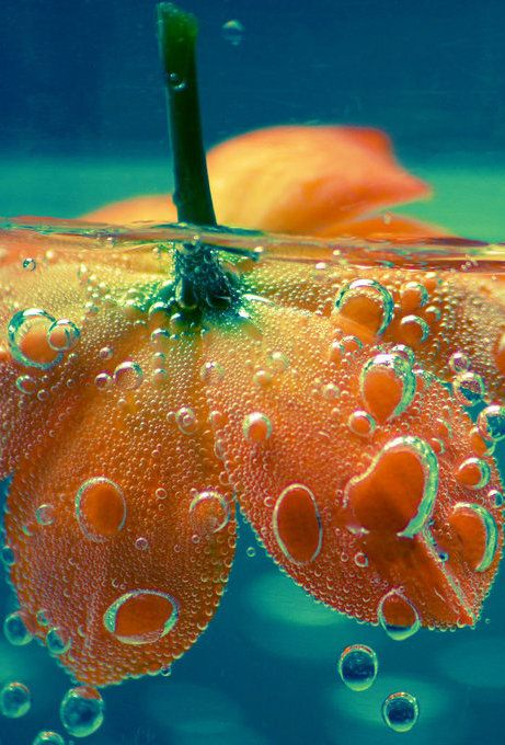 Water Drops and Flower.