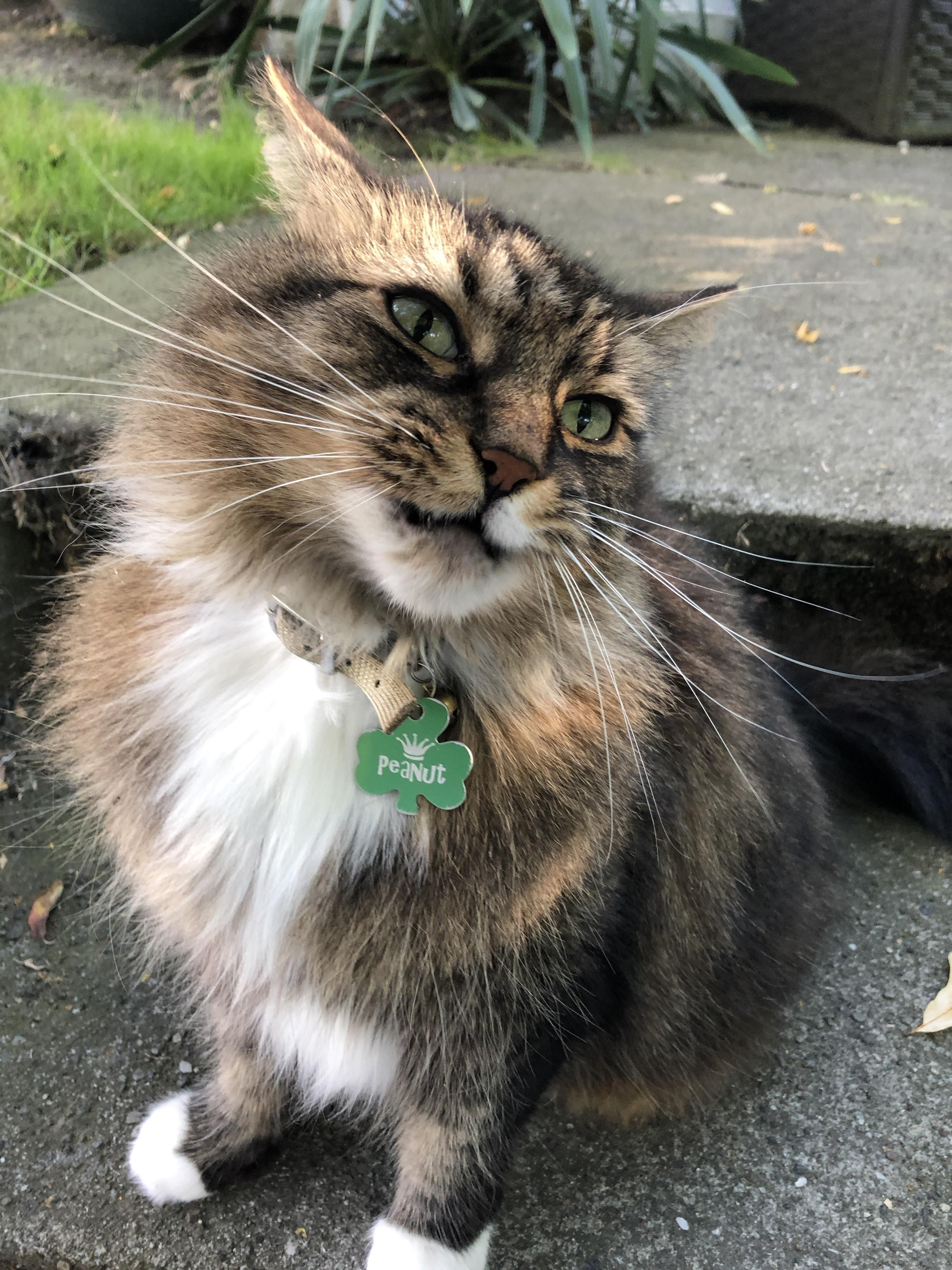 Met This Majestic Stoop Cat Yesterday Evening Crazy Cats Cute