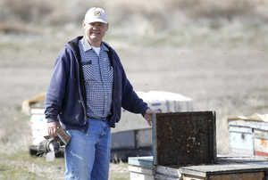 YAKIMA - Beekeeper tired of huge colony losses and pesticide overdoses killing his hives, placed bees in temperature controlled dormancy over the winter and has never had a better year, possible proof that toxins are playing a huge role in hive collapses.
