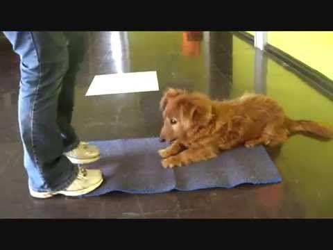 29 Advanced Dog Tricks For Trick Dog Title Dog Hacks Dog