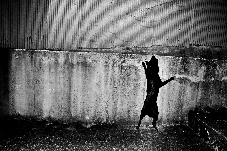 Man and dog - Hajime Kimura | Man, dog, Dogs, Dog walking