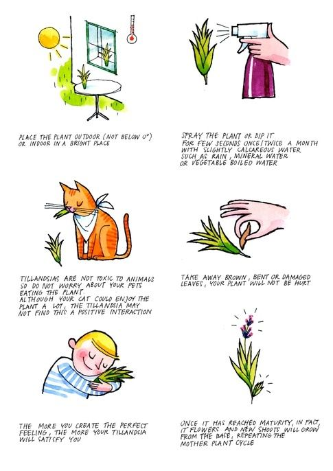 How To Take Care Of Tillandsia Air Plants Quora Air