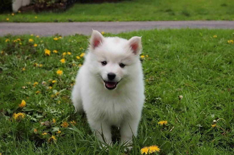 The 23 Cutest Dog Breeds You Ve Never Even Heard Of Cute Dogs