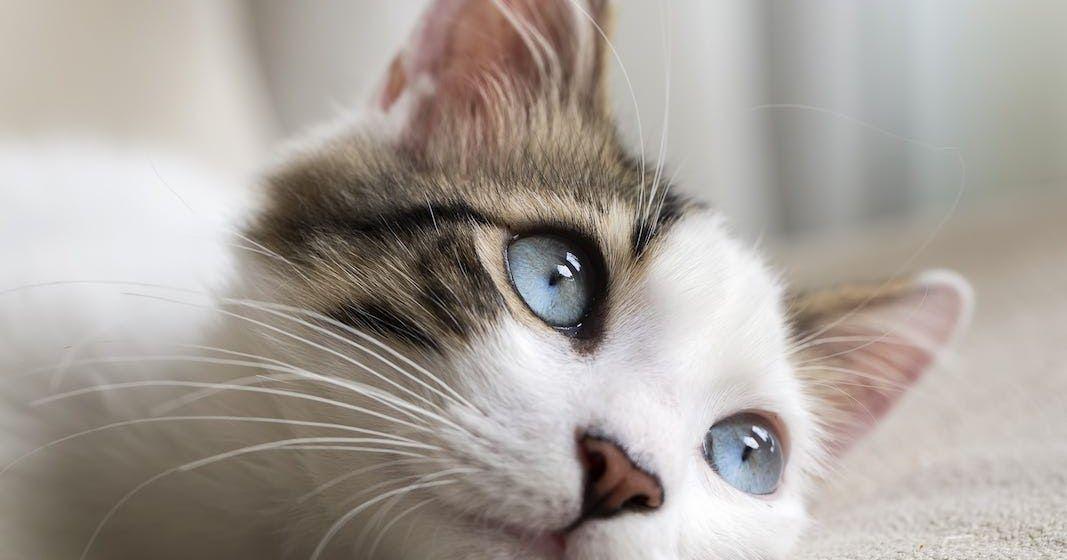 Blog Tentang Pasir Kucing Organik Natural Cat Litter Dan Berbagai Tips Trik Untuk Merawat Kucing Diantaranya Di 2020 Kucing Pasir