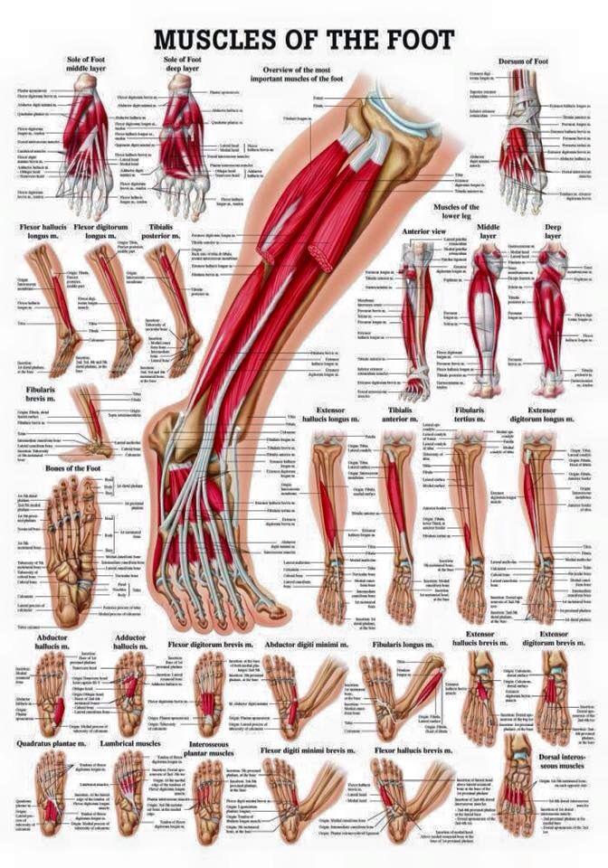 Pin de vishab fred en Science   Pinterest   Anatomía, Medicina y ...