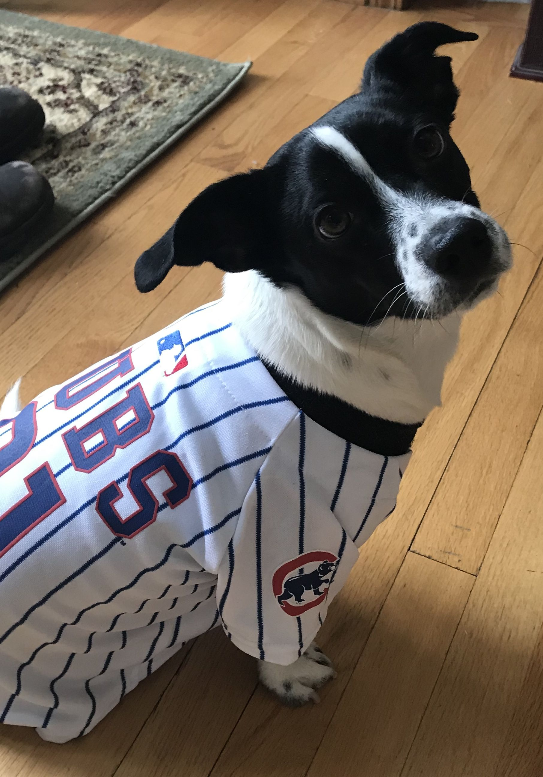 b5fb8704 Share your pride of your favorite MLB team with your Pooch with an ...