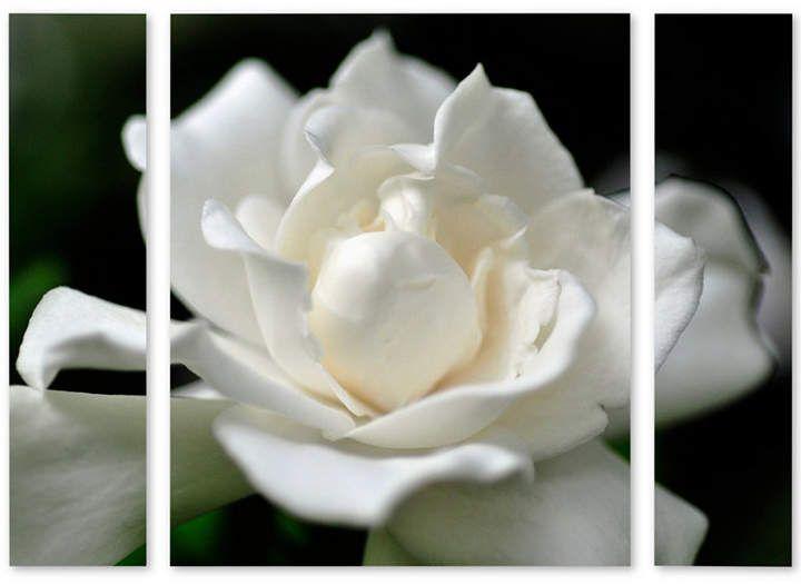 Gardenia Trademark Global Kurt Shaffer Lovely Gardenia Multi