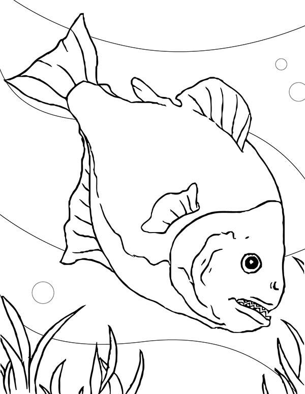9f4d6254a42a72ab93a15d7ce33049ee » Goldfish In Tank Coloring Pages