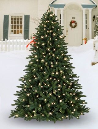 The Allegheny Evergreen Outdoor Tree is uniquely made for the