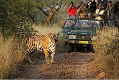 I Wanna See Tigers In The Wild India Tour Day Tours Jungle Safari