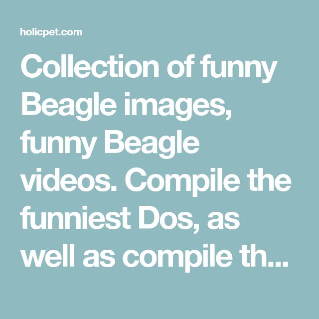 Beagle Funny Beagle Videos Cute Beagle Videos Beagle Puppy Beagle Funny Beagle Cute Beagles
