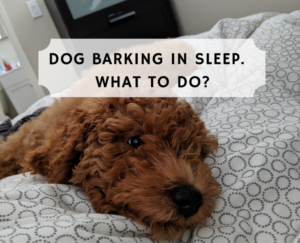 Dog Barking In Sleep What Does This Mean Dog Barking Dog Growling Dogs