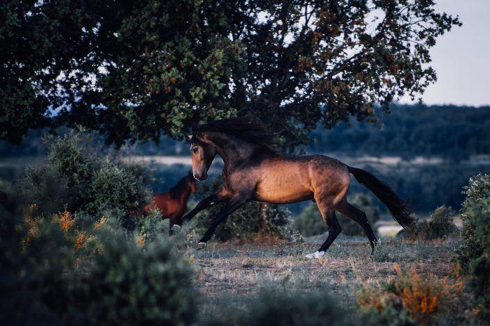 Fotos Pferde In Der Natur I In 2020 Pferde Schonste Pferde Niedliche Pferde