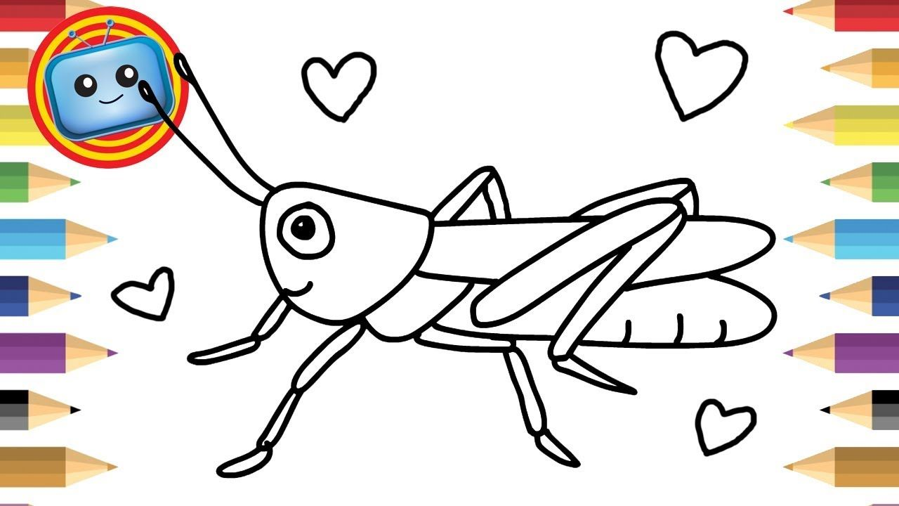 How to Draw a Grasshopper | Colouring Book | Simple ...