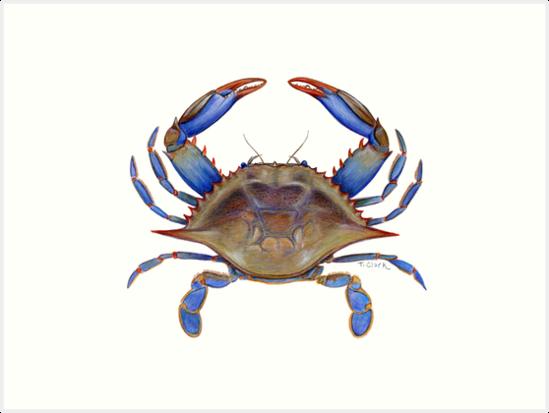 Blue Crab Callinectus Sapidus By Tamara Clark Blue Crab Blue Crabs Art Crab Painting