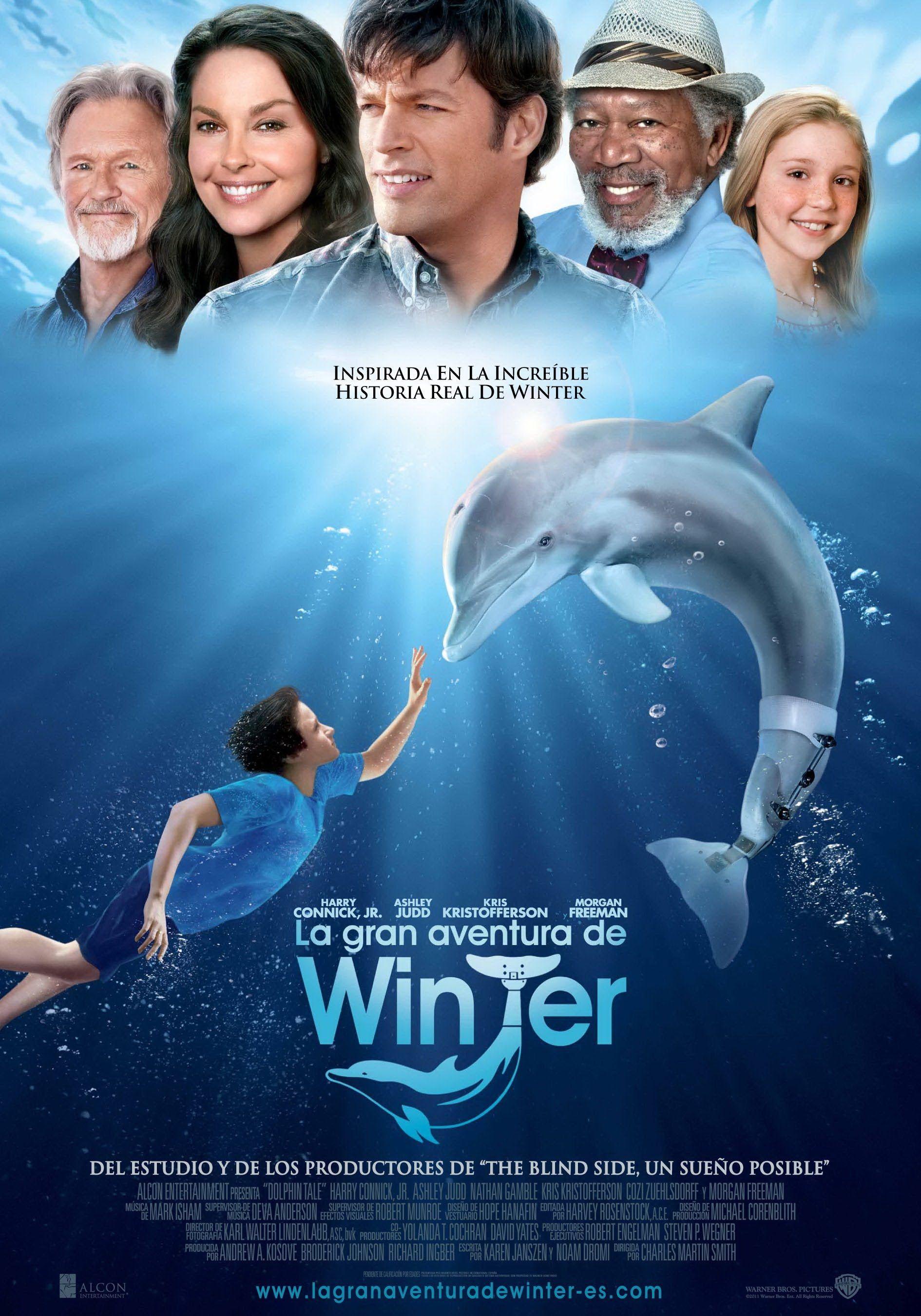 La Gran Aventura De Winter El Defín Winter El Delfín Delfines Ver Películas Gratis Online