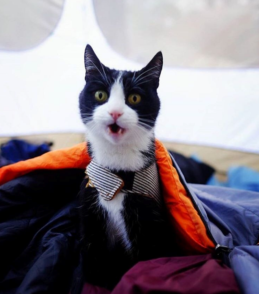 The Camping With Cats Instagram is Purrfect for Adventure