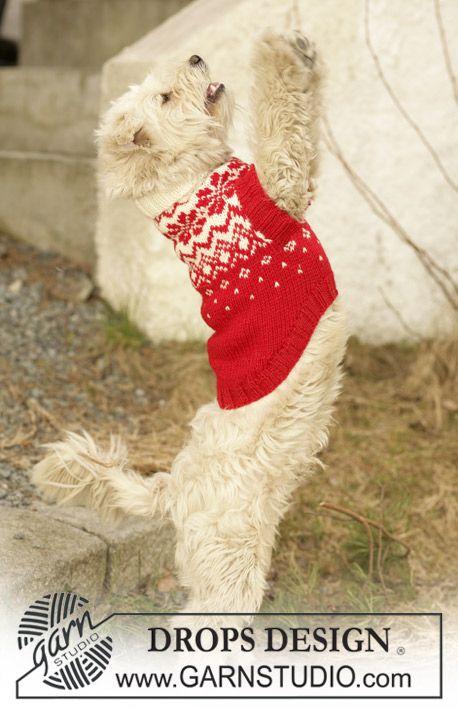 Free Pattern Stricken Stricken Hunde Pullover Und Häkeln