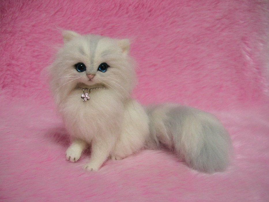 мини фотки котят представляем вам
